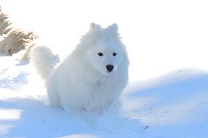 Photo d'un chien courant dans la neige